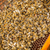 macro · tiro · abelhas · favo · de · mel · jardim · quadro - foto stock © grafvision