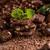 aprított · csokoládé · bár · tej · cukorka · eszik - stock fotó © grafvision