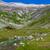 alpesi · tájkép · tehenek · Franciaország · tavasz · égbolt - stock fotó © grafvision