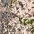 gebarsten · stenen · muur · oppervlak · textuur · steen - stockfoto © grafvision