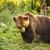 ヒグマ · ビッグ · 孤立した · 白 · 自然 · 背景 - ストックフォト © grafvision