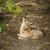 grey wolf stock photo © grafvision