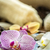 purple orchid flower stock photo © grafvision