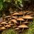 菌 · 日光 · 森林 · 秋 · 秋 · キノコ - ストックフォト © grafvision