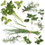 vers · kruiden · rosmarijn · citroen · balsem · geïsoleerd - stockfoto © grafvision