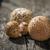 mushroom call blusher stock photo © grafvision