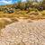 сушат · треснувший · земле · текстуры · пустыне · горячей - Сток-фото © grafvision