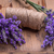 lavender flowers bunch stock photo © grafvision