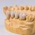 dentales · prótesis · artificial · diente · manos · de · trabajo - foto stock © grafvision