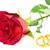 赤いバラ · リング · 黒 · 結婚式 · 中心 - ストックフォト © grazvydas
