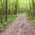 путь · зеленый · лес · закат · дороги · тропе - Сток-фото © grazvydas