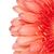 копия · пространства · белый · красный · Blossom · цветок · Daisy - Сток-фото © Grazvydas