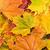 folhas · árvore · verde · vermelho - foto stock © Grazvydas