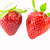 Two Ripe Red Strawberries stock photo © gregorydean