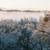 dente · floresta · madeira · natureza · luz · neve - foto stock © gregorydean