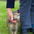 портрет · кошки · саду · Cute · глазах - Сток-фото © gsermek