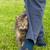 グレー · 白 · 猫 · 草 · 美しい - ストックフォト © gsermek