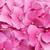 ピンク · 庭園 · 花 · 葉 · 夏 · 緑 - ストックフォト © gsermek