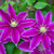 lila · virágok · természetes · textúra · természet · fény - stock fotó © gsermek