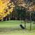гольф · осень · пейзаж · подробность · трава · гольф - Сток-фото © gsermek