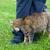 灰色の猫 · 美しい · 緑の目 · 自然 · 猫 · 髪 - ストックフォト © gsermek