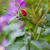 vibrante · aumentó · brote · Bush · Rose · Red · flor - foto stock © gsermek