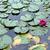roxo · água · primavera - foto stock © gsermek