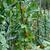 planta · jardim · natureza · folha · neve - foto stock © gsermek