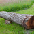 cut and fallen walnut tree can be used as bench stock photo © gsermek