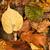 Leaves stock photo © Gudella