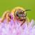 abeille · fleur · beauté · vert · usine - photo stock © guffoto