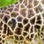 жираф · зоопарке · животного · плен · Африка · крыльями - Сток-фото © guffoto