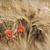 poppies stock photo © guffoto
