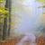 alberi · scenico · misty · foresta · autunno · soft - foto d'archivio © guffoto