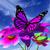 perene · prímula · primavera · jardim · flores · belo - foto stock © guru3d