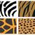zebra · hayvan · baskı · model - stok fotoğraf © hamik
