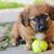 молодые · играет · мяча · зеленый · саду · собака - Сток-фото © hamik