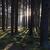 forêt · arbre · printemps · nature · arbres · été - photo stock © hanusst