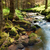 bos · kreek · hdr · grond · natuur · bomen - stockfoto © hanusst