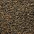 organik · kurutulmuş · kişniş · tohumları · yalıtılmış - stok fotoğraf © hanusst