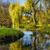tó · fűzfa · csendes · ágak · érintés · víz - stock fotó © hanusst