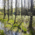 forêt · arbre · herbe · nature · paysage · arbres - photo stock © hanusst