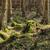 erdő · fák · nyár · növény · dzsungel · park - stock fotó © hanusst