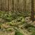 erdő · föld · fák · nyár · növény · dzsungel - stock fotó © hanusst