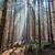 mooie · ochtend · licht · sparren · bos · stralen - stockfoto © hanusst