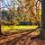 forêt · matin · soleil · nature · lumière · feuille - photo stock © hanusst
