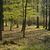 erdő · öreg · fa · fű · tájkép · fák - stock fotó © hanusst