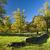 anglais · arbre · stand · seuls · campagne · ciel - photo stock © hanusst