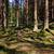 estate · abete · rosso · foresta · percorso · natura · stagione - foto d'archivio © hanusst
