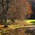 tavasz · erdő · ködös · reggel · út · nap - stock fotó © hanusst
